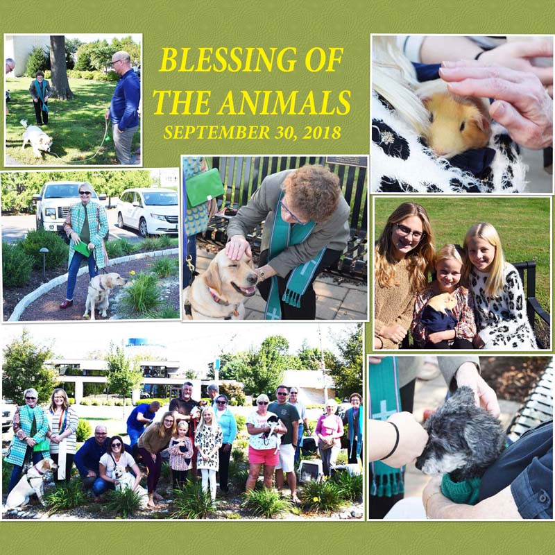 Blessing Of The Animals   St Johns UCC